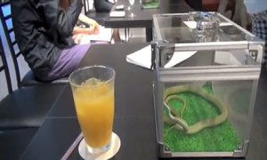 Quán cà phê rắn ở Tokyo