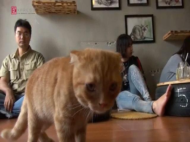 Quán cà phê vui đùa cùng mèo