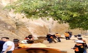 Nhân viên đấm vào mặt hổ ở ngôi đền Thái Lan