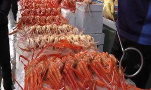 Khám phá chợ hải sản Jukdo ở Hàn Quốc