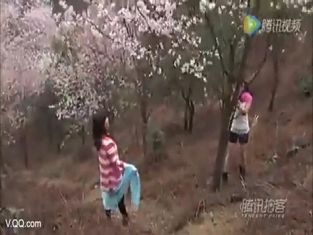 Hoa anh đào thê thảm dưới gót chân khách Trung Quốc