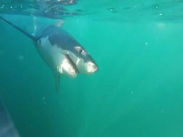 Trải nghiệm lặn cùng cá mập ở châu Phi