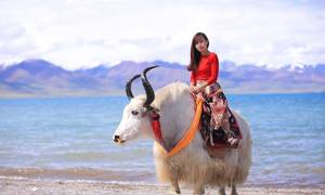 Tây Tạng đẹp mê hồn trong mắt nữ MC Việt