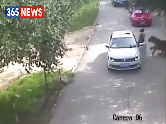 Hổ vồ du khách đến chết tại công viên Trung Quốc