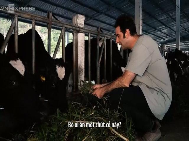 Khách tây lóng ngóng vắt sữa bò