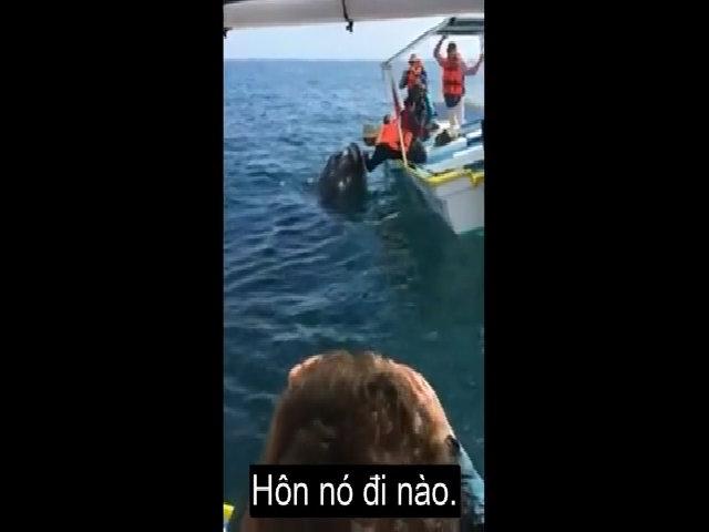 Du khách rướn người hôn cá voi trên biển