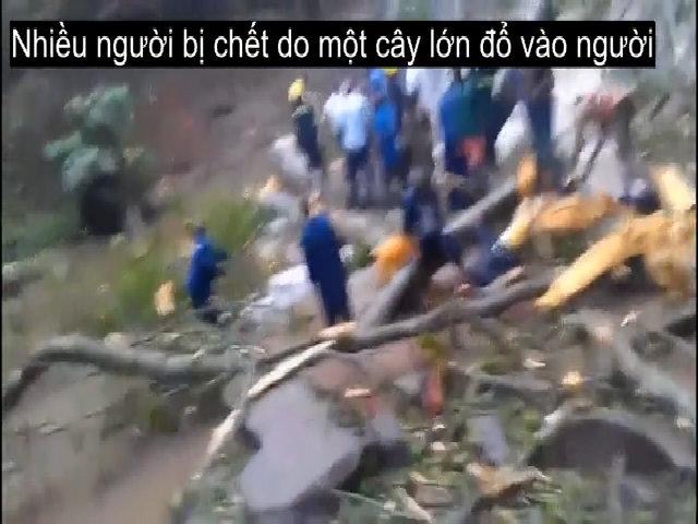 Gần 20 du khách tuổi teen thiệt mạng vì cây đổ ở thác nước
