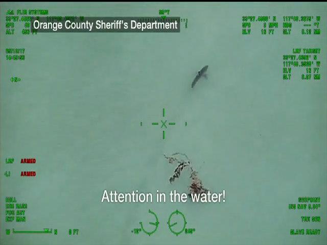 Du khách lạnh gáy phát hiện cá mập bơi trước mặt