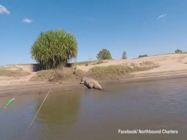 Cú quay đầu của cá sấu khổng lồ khiến du khách tái mặt