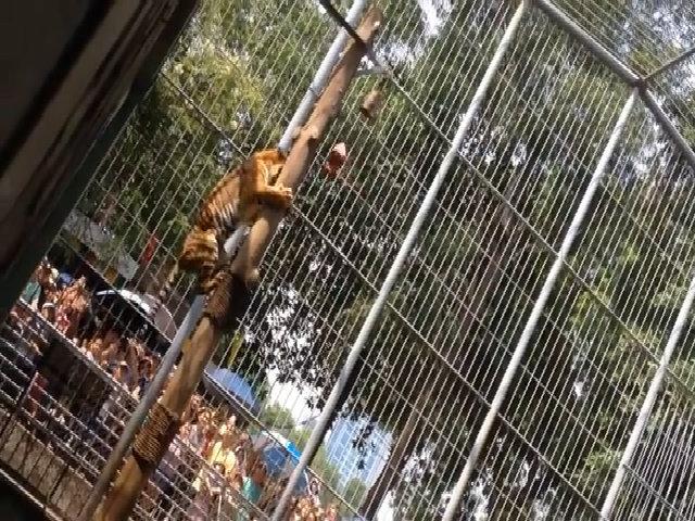 Hồ vồ thức ăn trong vườn thú Thủ Lệ