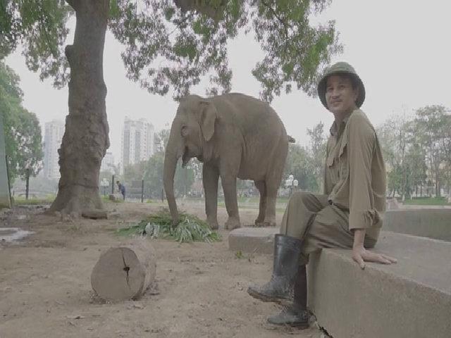 Những người ăn với voi, ngủ với hổ giữa Hà Nội