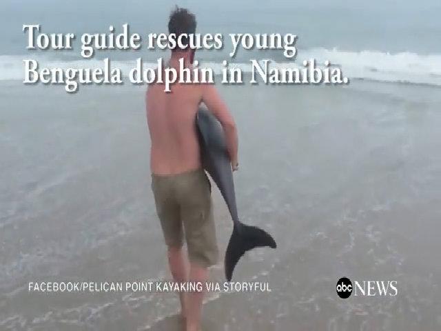 Cá heo con dạt vào bờ bị du khách chuyền tay chụp ảnh tới chết