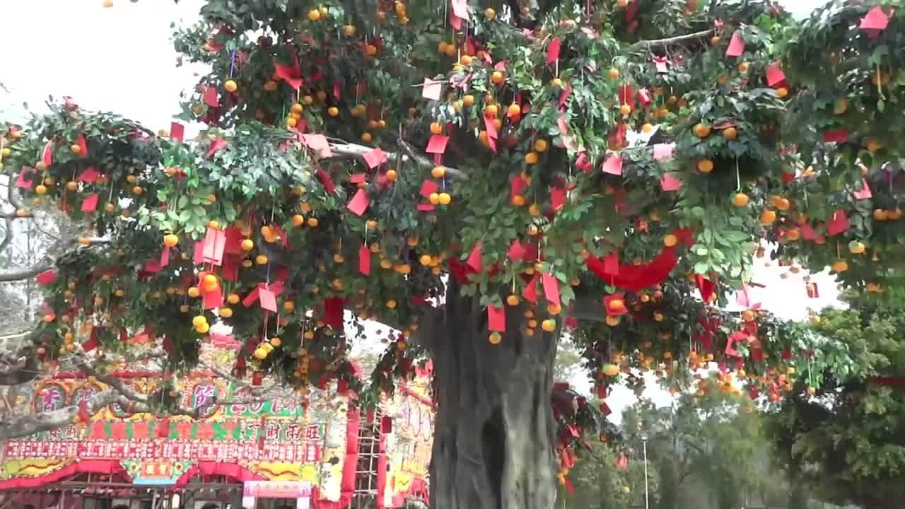Tục ném cam cầu may mắn vào năm mới ở Hong Kong(bài Tết)