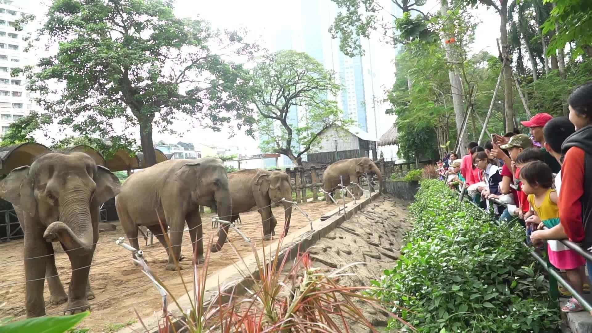 Người Sài Gòn tấp nập đi cho thú ăn dịp Tết