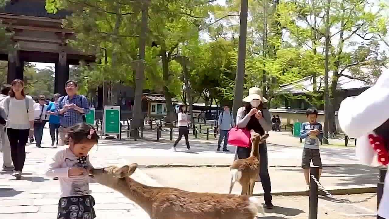 Thiên đường của loài hươu hoang dã ở Nhật Bản