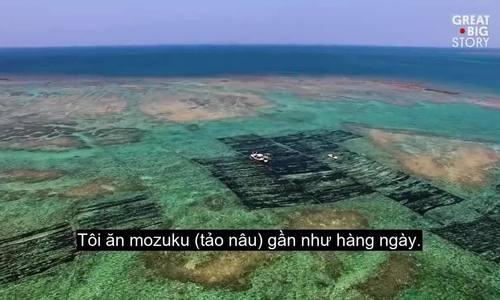 Nghề nuôi tảo biển chỉ có ở cực nam Nhật Bản
