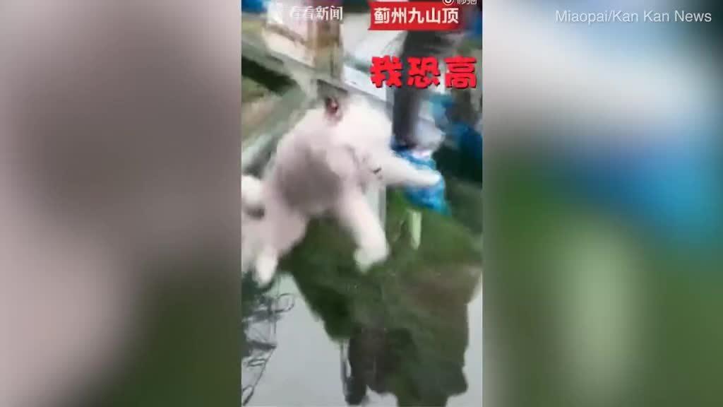 Chủ dẫn đi chơi cầu kính Trung Quốc, chó không dám nhúc nhích
