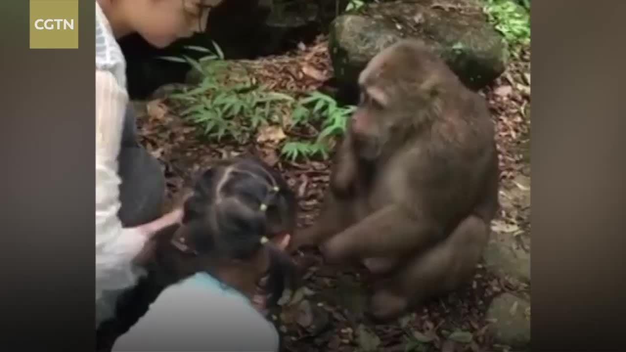 Cho khỉ ăn, bé gái bị đẩy ngã 'chổng vó' tại Trung Quốc