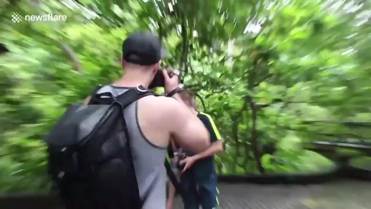 Kết đắng cho du khách cố chụp ảnh với khỉ tại Bali