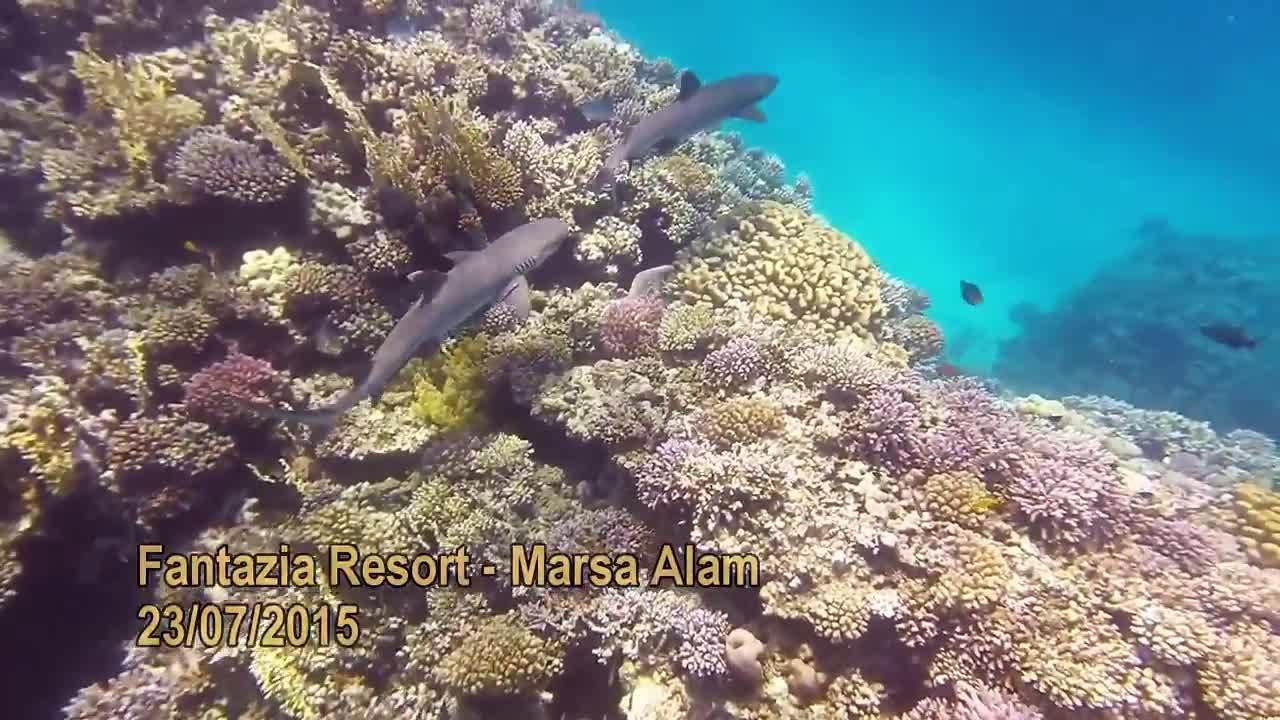 Cá mập ăn thịt người đàn ông nghỉ dưỡng tại Biển Đỏ