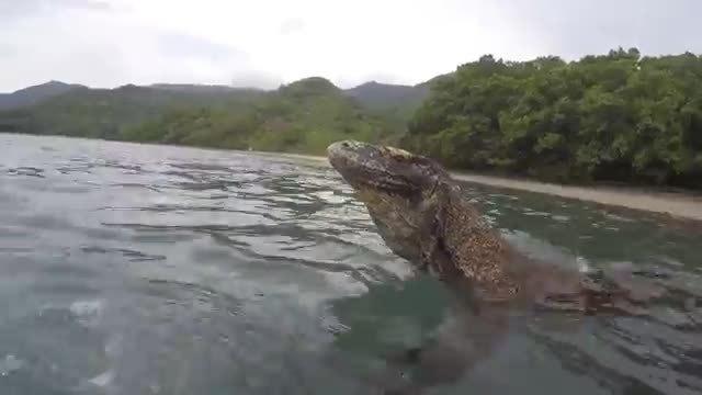 Du khách nhanh trí khi bị rồng hoang Komodo rình lên thuyền