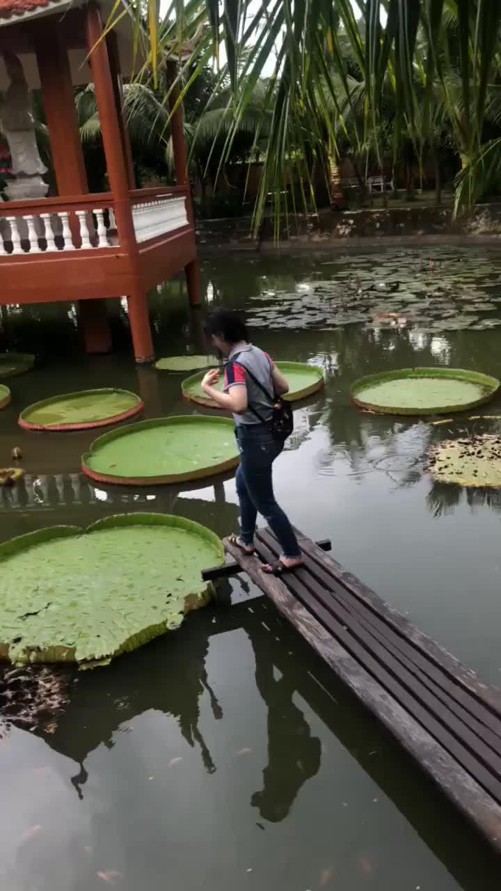 Cô gái Việt ngã nhào khi bước lên lá sen gây sốt MXH nước ngoài