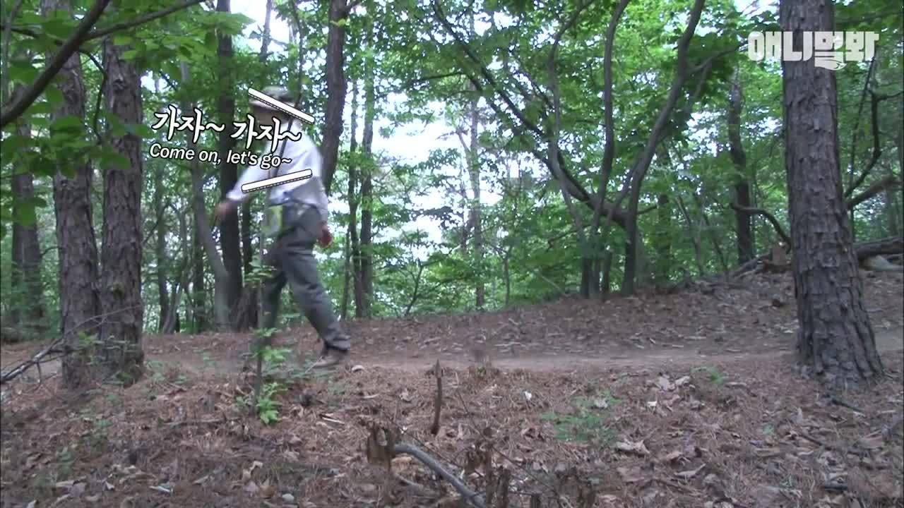 Video người đàn ông leo núi cùng 21 con vịt con gây bão mạng