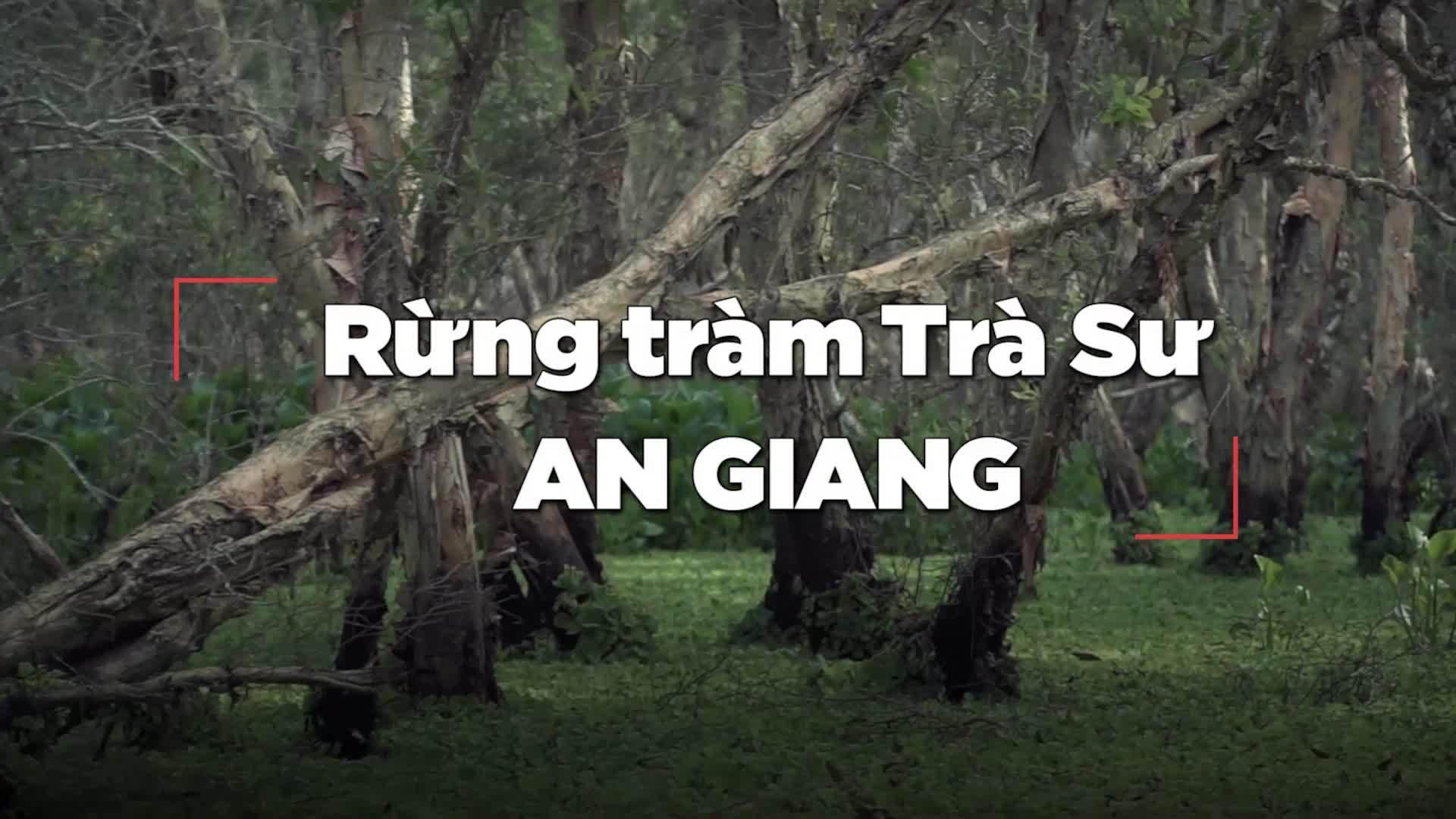 60 giây khám phá rừng tràm đẹp nhất Việt Nam