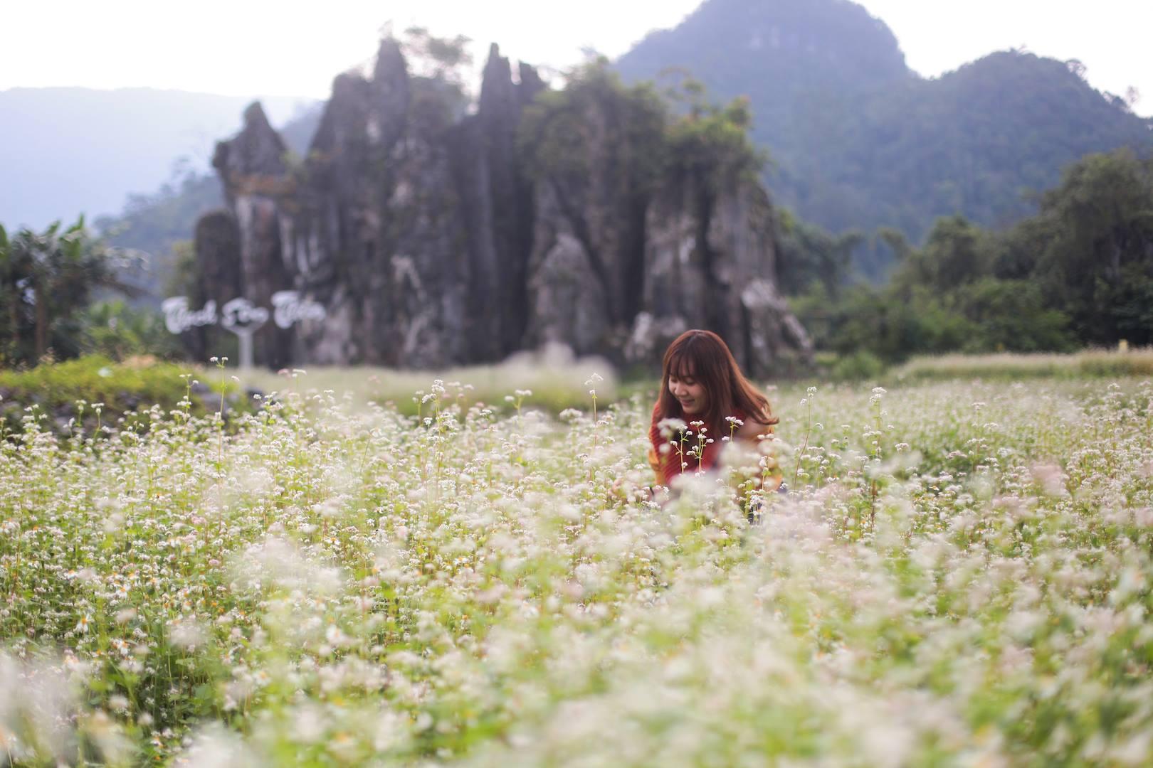 Vẻ đẹp của mùa hoa tam giác mạch