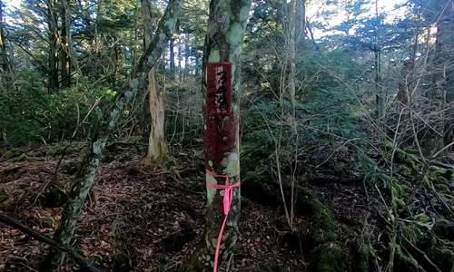Khu rừng tự sát