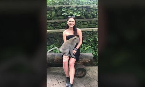 Cô gái lộ ngực vì bị khỉ kéo váy trong rừng thiêng Bali