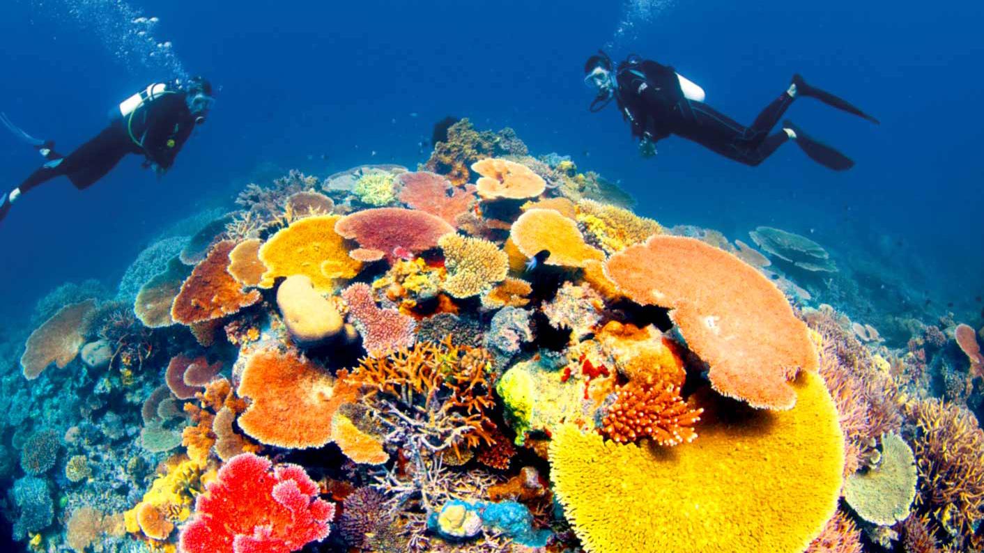 Những rạn san hô nhiều màu sắc nhất trên thế giới