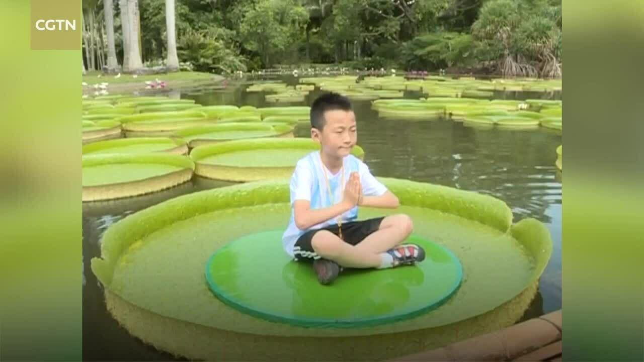 Khách Trung Quốc đổ xô vào vườn thực vật xem sen vua khổng lồ