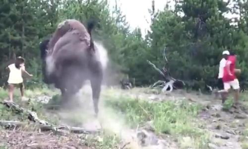 Khách nhí bị bò rừng húc bay người trong công viên Mỹ