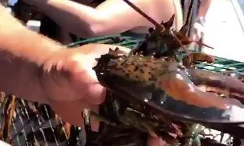 Nơi du khách có thể bắt và chế biến tôm hùm ngay trên biển