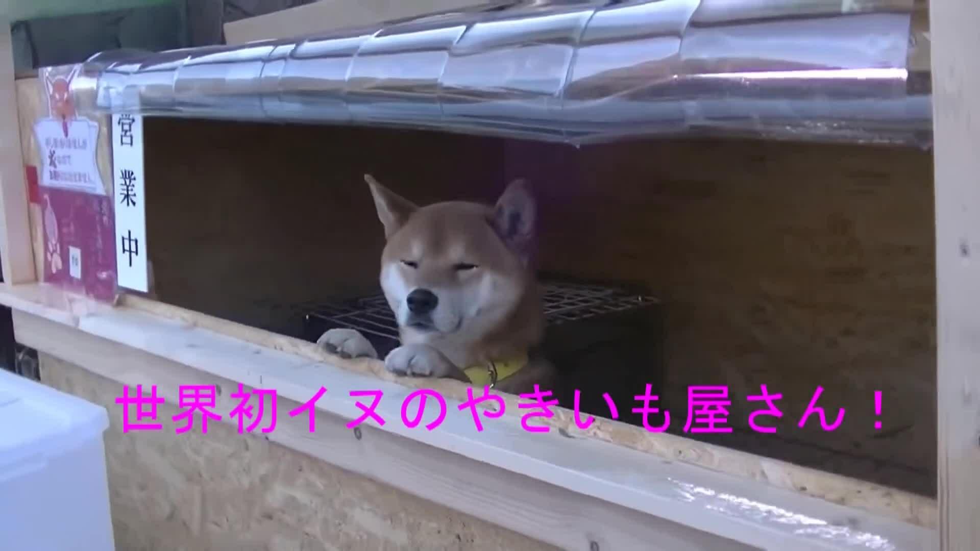 Gặp chú chó bán khoai lang nướng ở Nhật Bản