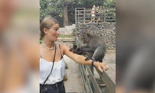 Kỷ niệm nhớ đời cho khách nữ chụp ảnh cùng khỉ hoang