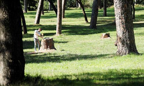 Phép màu cho những cái cây trơ gốc ở thành Rome/Phép màu 'hồi sinh' những gốc cây chết của thành Ro