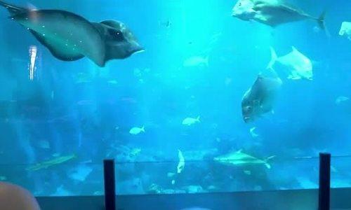 Bữa tối dưới lòng đại dương