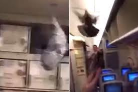 Bồ câu gây rắc rối khi mắc kẹt trong cabin máy bay