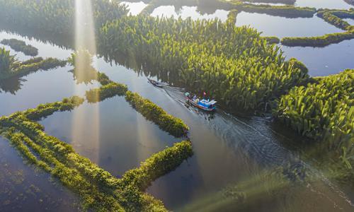 Rừng dừa nước Tịnh Khê