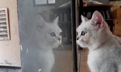 Quán cà phê những người yêu mèo không thể bỏ lỡ