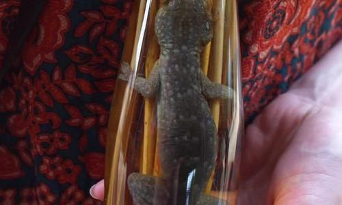 Làng chuyên ngâm rượu rắn ở Lào