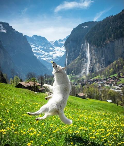 Chú chó dẫn khách du lịch qua màn ảnh