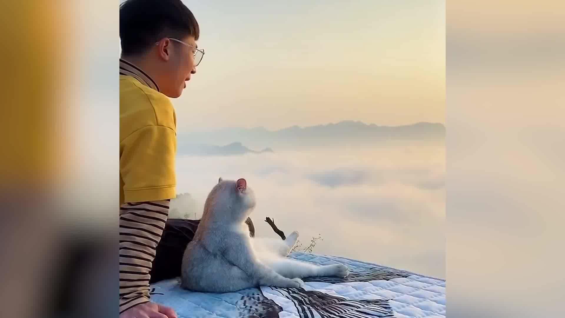 Cùng mèo cưng đi khắp Trung Quốc