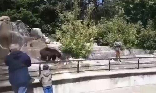 Say rượu vào sởthú vật nhau với gấu