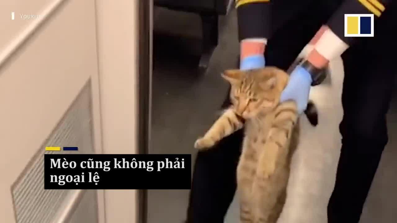 Mèo bị đuổi khỏi tàu vì đi lậu vé