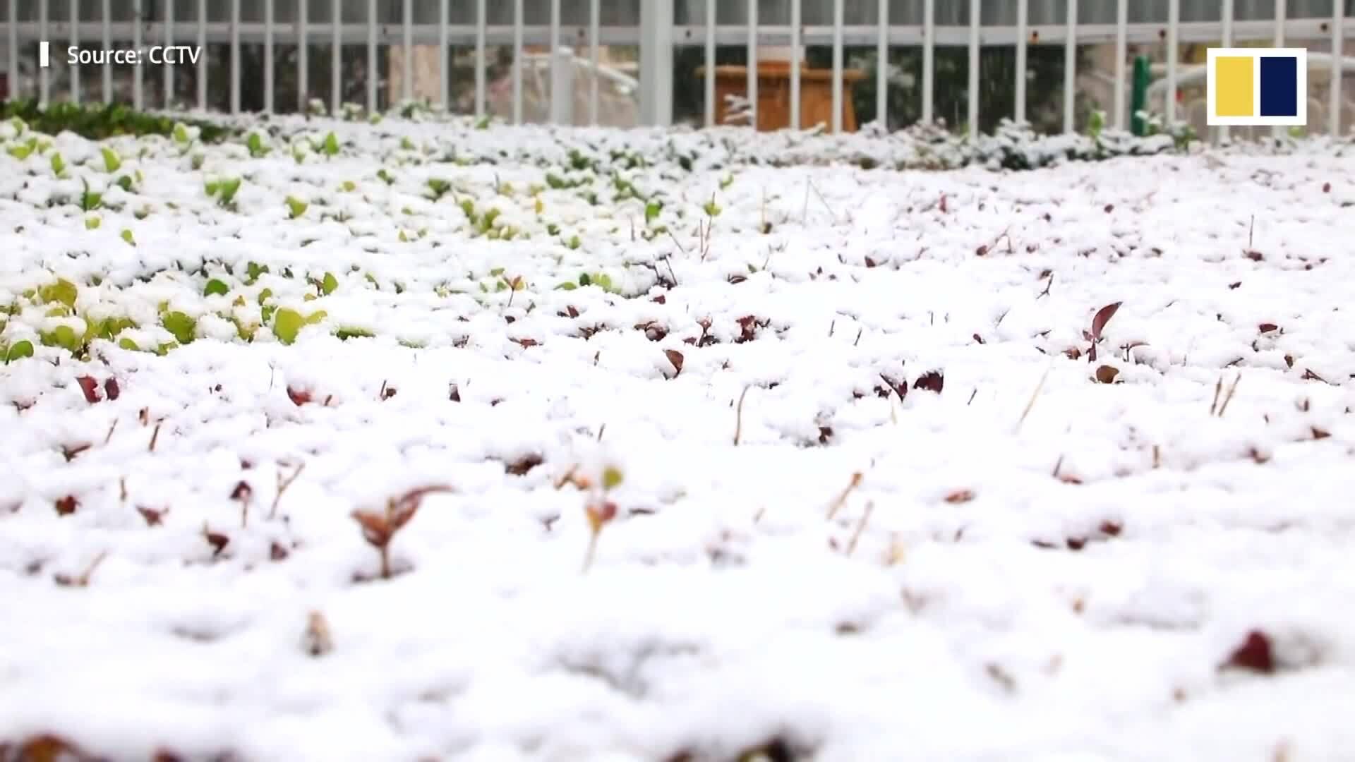 Tuyết rơi trắng xóa khắp Trung Quốc