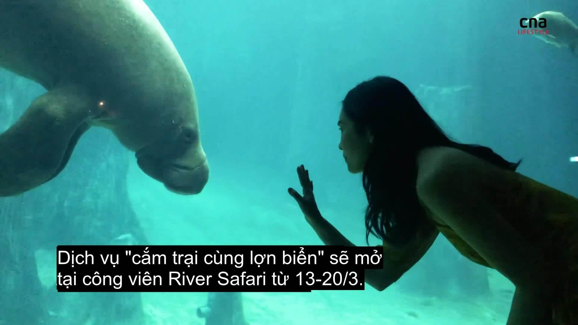 Cắm trại ngắm lợn biển trong thủy cung