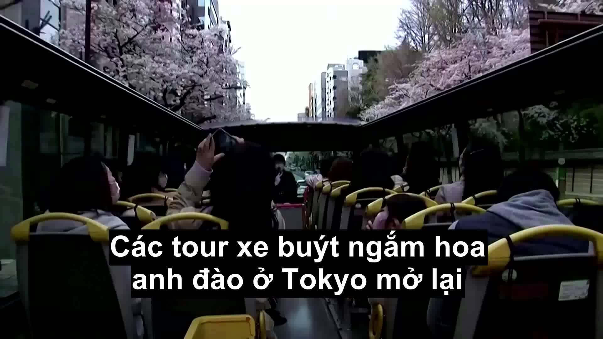Ngồi xe buýt ngắm hoa anh đào Tokyo